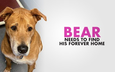 Big Bear Needs A Home