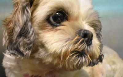 Adopting Senior Dogs – An Act of Kindness