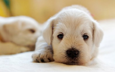 Things to Know Prior to Adopting from One of A Kind Pet Rescue