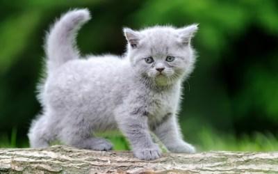 A Kitten Shower