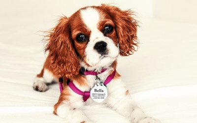 Every Pet Needs an ID