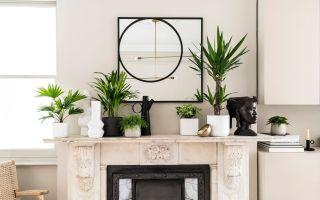 Indoor plants foli8 UK