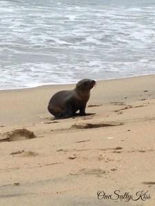 The Heartbreaking Sea Lion Crisis