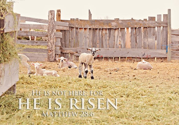He is not here: for he is risen. Matthew 28:6