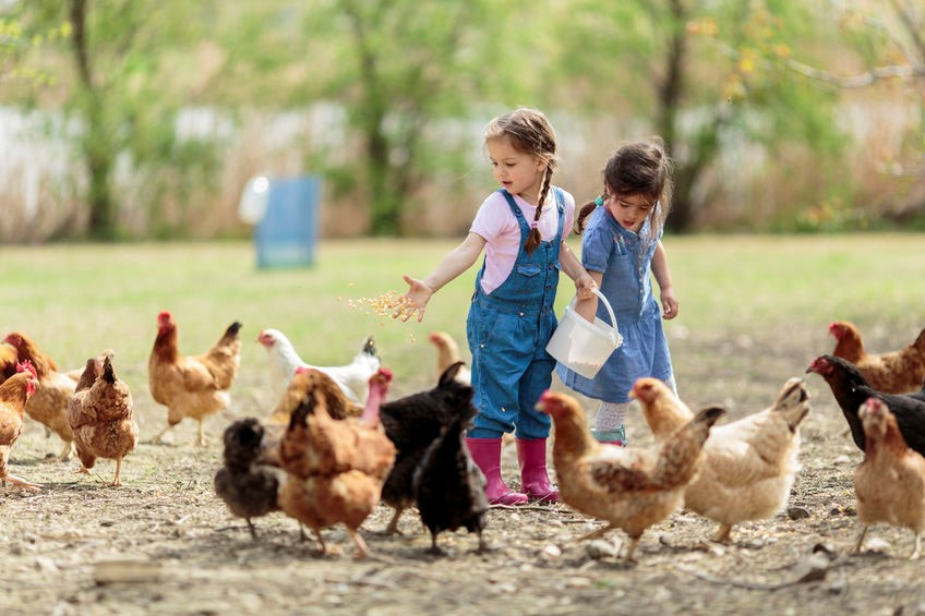 The Best Ways of Raising Chickens in the City in 2021