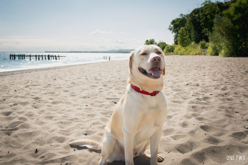 pet portrait dog on beach