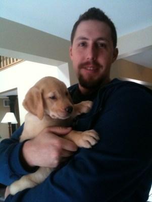 bayer-puppy-labrador