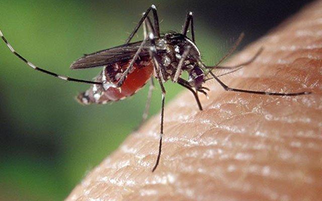 Track the Mosquito Bite