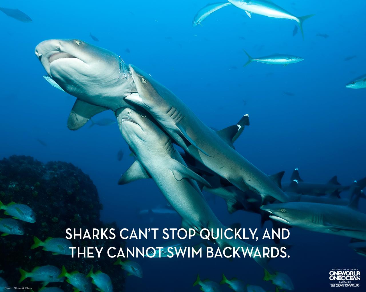 Shark Week Toolkit