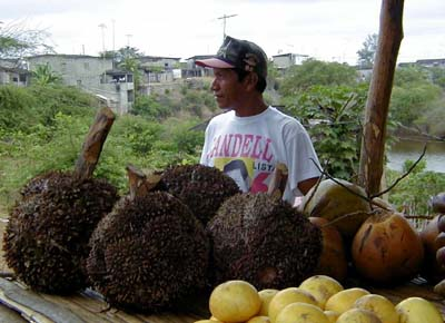a stand in Ecuador which sells tagua nut cabezas.