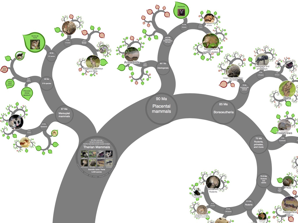 Onezoom Tree Of Life Explorer