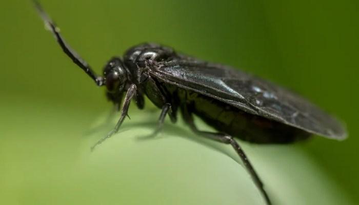 5 tips tegen rouwvliegjes