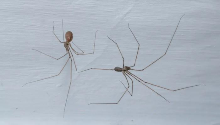 Tips tegen spinnen