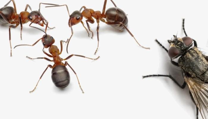 Antwoord op alle fabels en feitjes over mieren en vliegen