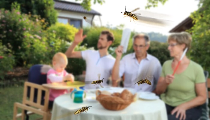 Augustus: de wespenmaand