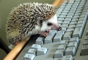 hedgehog typing