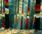 6 bosques de España para perderse en otoño