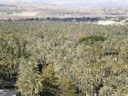 A la sombra de los jardines más exóticos de España