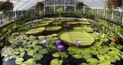 El despertar de la primavera en los mejores Jardines Botánicos del mundo