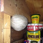 Wasp nest in garden shed