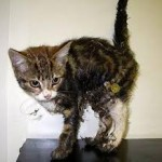 Kitten rescued from glue trap