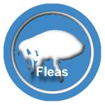 flea removal