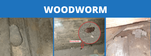Woodworm Specialist
