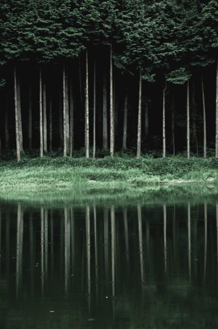 Áborles verticales, verde, reflejo