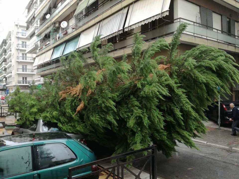 Δέντρο έπεσε πάνω σε αυτοκίνητα στη Λάρισα – Δείτε φωτογραφίες