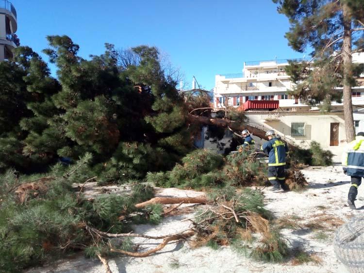 Πρωτοφανές και σπάνιο φαινόμενο για τη Λάρισα τα 9 μποφόρ - Κόπηκαν πάνω από 30 δέντρα την Πέμπτη