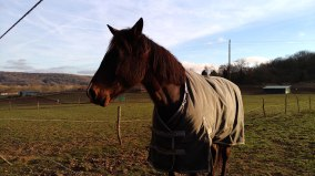 Nous aussi on a sorti le cheval, comme dans la vidéo de présentation.