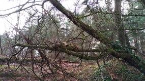 """""""Vous avez trouvé votre arbre-repère, bravo !"""" Denis Brogniart"""