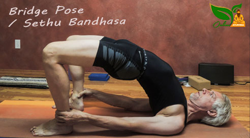 Bridge Pose or Sethu Bandhasa image