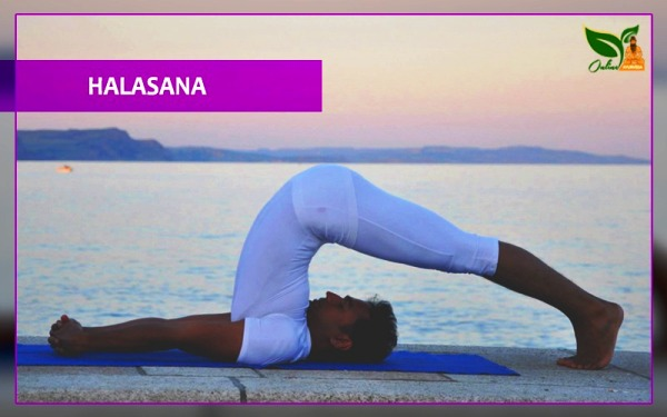 halasana plough pose images