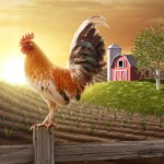 Home decorating: The lore of the rooster