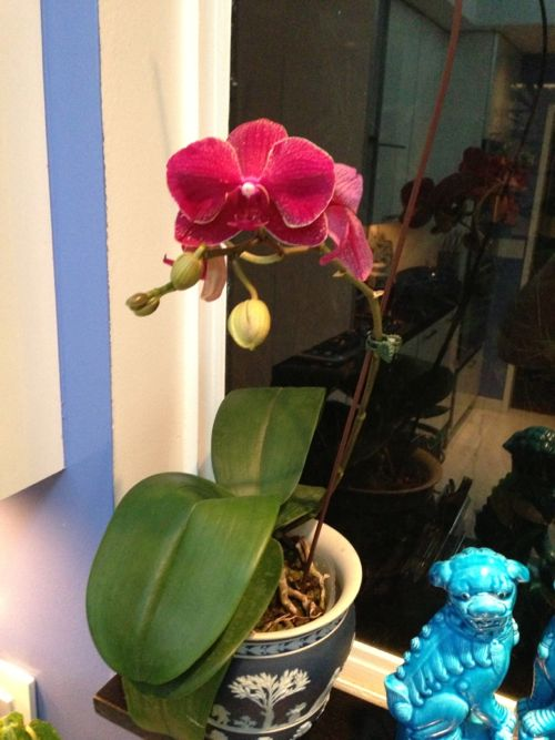 Orchid www.onlineflowergarden.com