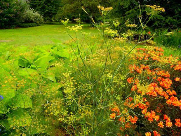 Alstroemeria - Indian Summer at Kew Gardens Border