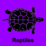 Reptile Fossils