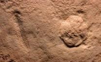 Spriggina cast