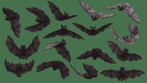 species of bats