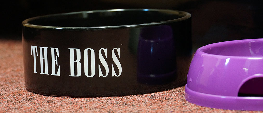the-boss-bowl