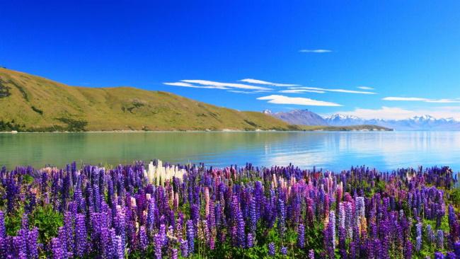 Lake Tekapo-10 Natural Destinations to Explore in New Zealand