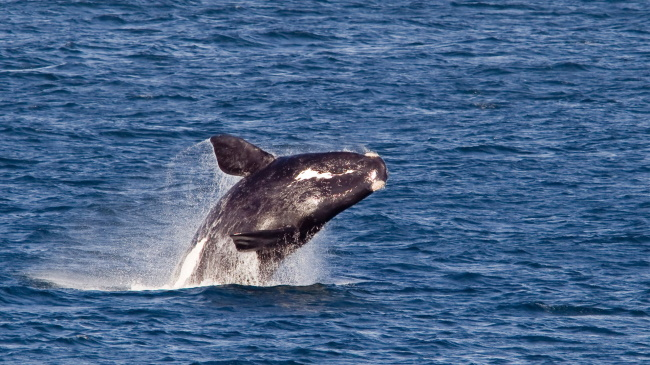 Treat-Yourself-with-a-Whale-Watching-Experience