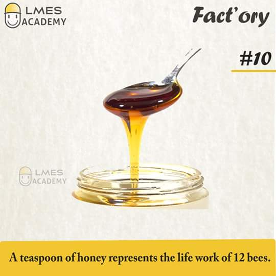 #10 A teaspoon of honey represents the life work of 12 bees
