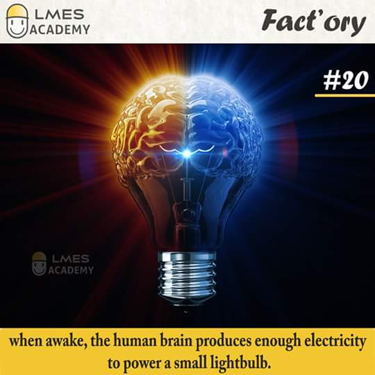 #20 When awake, the human brain produces enough electricity to power a small lightbulb.