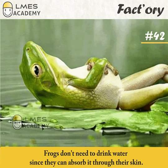 #42 Frogs don't need to drink water since they can absorb it through their skin.