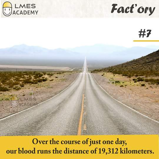 #7 Over the course of just one day, our blood runs the distance of 19,312 kilometers