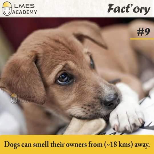 #9 Dogs can smell their owners from ( ~ 18 kms ) away.