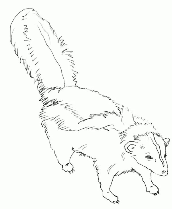 skunk coloring pages # 4