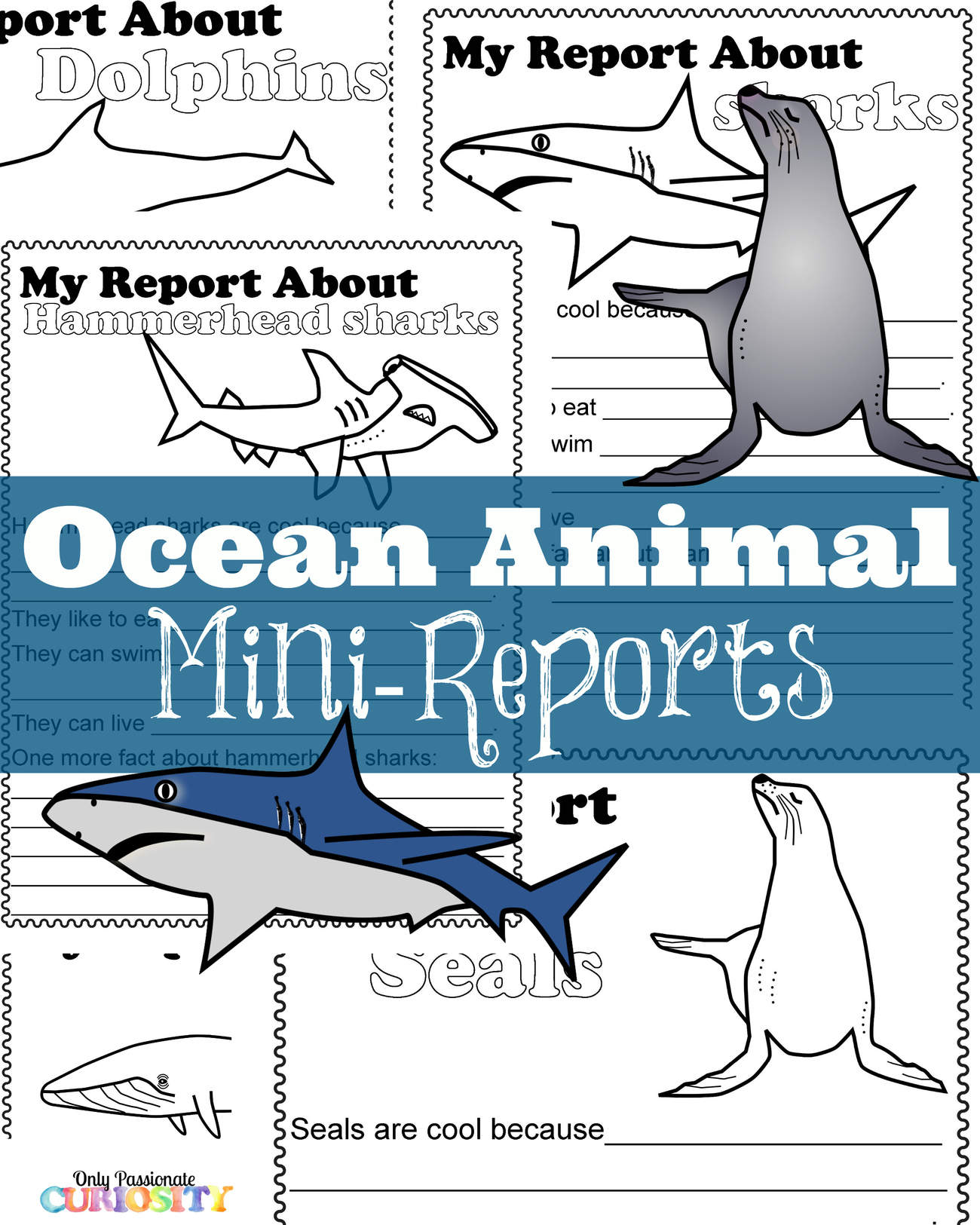 Ocean Animal Mini Reports Only Passionate Curiosity